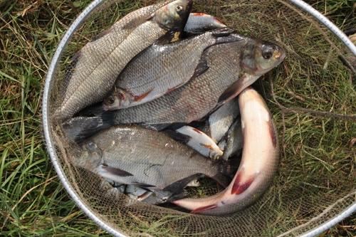 рыбная прикормка
